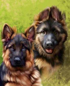 Gsd  #German #Shepherd dogs