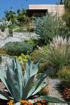 succulents and pampas grass make for a great low maintenence lawnscape