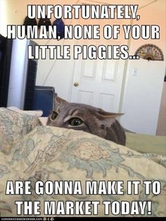You Gonna Go Wee Wee Wee, Human? - LOLcats is the best place to find and submit funny cat memes and other silly cat materials to share with the world. We find the funny cats that make you LOL so… Funny Animal Memes, Cute Funny Animals, Funny Cute, Cute Cats, Funny Memes, Funniest Memes, Funny Kitties, Funny Monkeys, Animal Captions