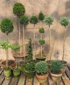 #topiary