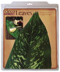 EuroQuest Imports Large Tropical Deco Parchment Leaves, Package of 10 *** Learn more by visiting the image link.