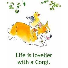 Life is lovelier with a Corgi. #corgipictures