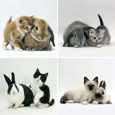 AHH!!!  Matching kitties and bunnies!  LOVE! <3  That black and white kitty looks like Wiffles!!