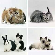children of rabbit <3 cat?