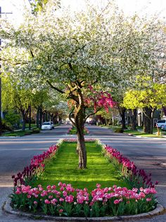 The streets of Holland. When I was a little girl we would dress up in our authentic Dutch costumes and stand on these boulevards. The tourists would take our pictures during Tulip Time.
