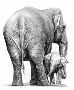 Indian Elephant Drawing