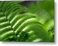 Fern Leaf Healing Art Metal Print by Jenny Rainbow. All metal prints are professionally printed, packaged, and shipped within 3 - 4 business days and delivered ready-to-hang on your wall. Choose from multiple sizes and mounting options. Art Prints For Home, Home Art, Fine Art Prints, Dusk Sky, Green Texture, Any Images, Art Techniques, Fern, How To Be Outgoing