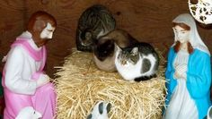Everything about this made my Monday. | Feral cats hijack nativity scene in Brooklyn
