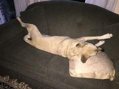 I am not sharing this sofa!