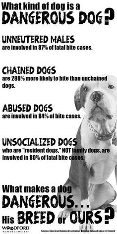 What makes a dog dangerous...? Any dangerous dog is the product of a very ignorant, irresponsible human!