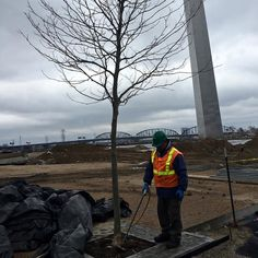 Exciting news! We treated some of our newly planted London Plane trees with a compost tea application and applied over 1000 gallons of LBAs (Liquid Biological Amendments). Another great step towards facilitating a sustainable environment in this progressing landscape. #sustainability #organic #londonplanetree #nationalparkservice #stlouisarch #composttea #800trees #missouri #tree #care #LBAs #management #arch #cityarchriver #projects #collaboration #ecological #success #transformational…