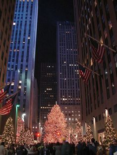 The Enchanted Tree, Rockefeller Plaza, NYC Copyright: Christopher Strickland