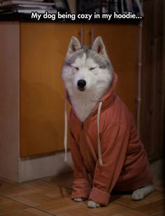 If I ever get a big dog I'll let em' wrap up in my hoodie for as long as they want