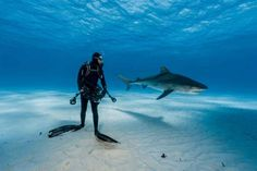 As 15 melhores fotos da National Geographic Scuba Diving Quotes, Shark Diving, Cave Diving, Sharks, Bahamas, Orcas, Shark Photos, Megalodon, Science Photos