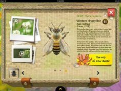 Appysmarts - Meet the Insects: Water & Grass Edition Funny Apps, Best Educational Apps, Insect Species, Great Apps, Bugs And Insects, Creating A Blog, Blogging For Beginners, Science And Nature, How To Start A Blog