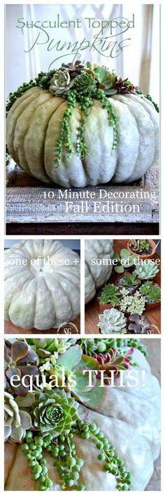 Gardening Autumn - SUCCULENT TOPPED PUMPKINS-An easy and show stopping way to decorate a pumpkin! - With the arrival of rains and falling temperatures autumn is a perfect opportunity to make new plantations Fall Home Decor, Autumn Home, Cactus Y Suculentas, Fall Table, Succulents Garden, Succulent Planters, Hanging Planters, Pumpkin Decorating, Fall Decorating