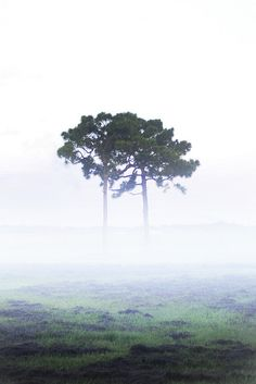 Above and below the mist