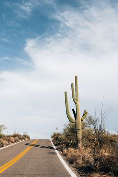 theriversandtheroads:  Saguaro National Park