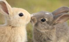 Cuddly animals are so adorable. I don't think I've ever been able to scroll through photos without wanting to own a zoo. For those who have a soft spot for animals, there's 13 Top Cuddly Cute Animals Kissing, Super Cute Animals, Cute Animal Photos, Animal Pictures, Cute Pictures, Rabbit Pictures, Animal Fun, Baby Bunnies, Cute Bunny