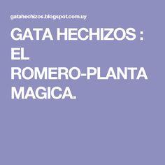 GATA HECHIZOS : EL ROMERO-PLANTA MAGICA.