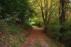 Camino de Auzkue, 24.10.15
