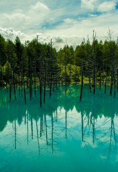 #Biei, #Hokkaido, #Japan.日本,北海道,美瑛