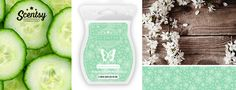 NEW Seasonal Scentsation Scentsy Wax Bar – Scentimental Candle Store