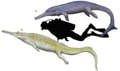1.Geosaurus giganteus 2.Teleosaurus cadomensis