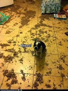"""""""Aliens?"""" ~ Dog Shaming shame -  Attack Of The Funny Animals – 60 Pics"""