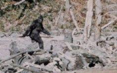 Il Bigfoot, avvistamenti e smentite, qual'è la verità? #bigfoot #avvistamenti #smentite