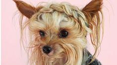 http://www.revelist.com/hair/williecute-hair/5666