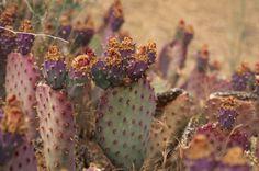 Desert+Animals+and+Plants | Mojave Desert Animals and Plants