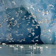 Photo by @nickcobbing Like these kittiwakes (feeding on a glacial upwelling on Arctic Svalbard) our lives are linked to ice too. Our relatively stable climate is partly supported by consistent Arctic sea ice cover. For our seas and oceans to stay at current levels relies on the balance between the snow accumulation and melt rate of glacial ice. The Paris climate talks attended by195 countries have just finished and 150 world leaders have come home promising to cut carbon emissions. It's up…