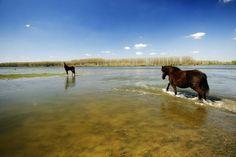 The incredible magic of Vojvodina (PHOTO)