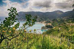 Liguria na majówkę- Cinque Terre w jeden dzień - Never Ending Travel Cinque Terre, Never, Mountains, Nature, Travel, Naturaleza, Viajes, Destinations, Traveling