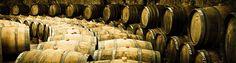 Viniculture.pl   To i owo o winnych szczepach, w tym również i o portugalskich