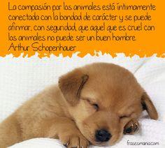 Compasión por los animales