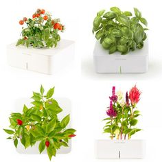 Battery Powered garden // Apartment Therapy // Fresh basil all year long...