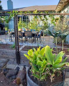 "Deanna ~ Central Coast of CA on Instagram: ""Methinks it's a back-patio-sittin', chicken-chattin', cribbage-playin', fire-burnin' kinda Friday 🍃🐓🎶🔥🍻♣️🍂 #fluffybuttfriday"" Chicken Garden, Garden Junk, Dry Creek, Outdoor Living, Outdoor Decor, Back Patio, Urban Farming, Dream Garden, Garden Plants"