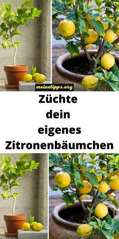 Green Life, Go Green, Balcony Design, Green Nature, Ikebana, Sustainable Living, Garden Plants, Flower Power, Planting Flowers