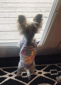 Yorkie Puppy, Yorkies, Yorkshire Terrier, Animals And Pets, Fur Babies, Puppies, Kids, Baby, Yorkshire Terriers