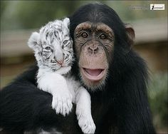 cute animals with funny captions  hd wallpapers