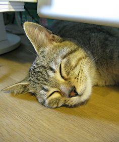 """""""A cat can calculate mathematically the exact spot to lie to cause the most inconvenience."""" --Pam Brown"""