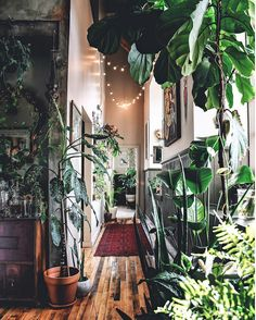 my scandinavian home: An incredible hallway full of plants! Photo / design: Hilton Carter #hallway #plants