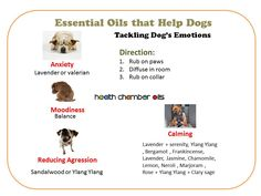 Anxiety , Moodiness , Reducing Aggression and Calming Essential Oils Dogs, Essential Oil Uses, Doterra Essential Oils, Yl Oils, Dog Separation Anxiety, Dog Anxiety, Young Living Oils, Young Living Essential Oils, Dog Emotions