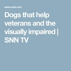 Dogs That Help Veterans And The Visually Impaired Snn Tv Prevent Grey Hair Aging