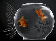 Like two lost souls Swimming in a fish bowl