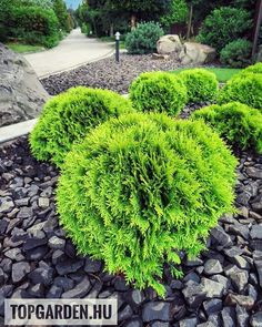 #mirjam #thuja #tuja #andezit #landscape #kertszépítő #kertépítés #kerttervezés #garten #🌿 Land Scape, Stepping Stones, Backyard, Outdoor Decor, Plants, Instagram, Lawn And Garden, Stair Risers, Patio