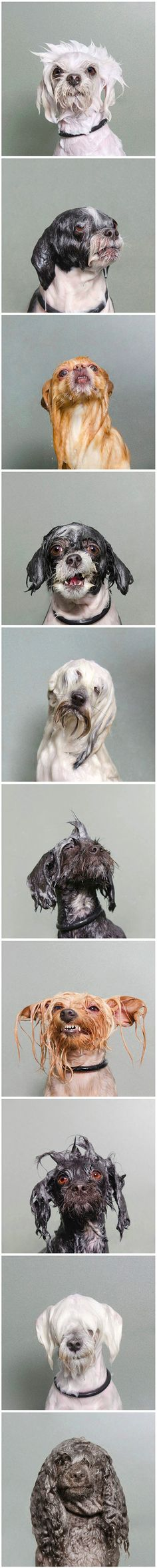 'Wet Dog' by Sophie Gamanda Si esto no te hace reir....