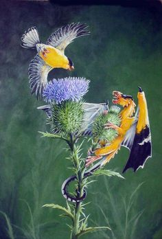 Goldfinches by Hbruton.deviantart.com on @deviantART